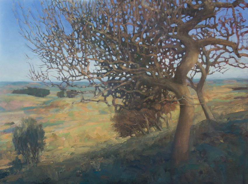 Old Oak Tree at Normans Law Fife. Oil landscape painting of trees.
