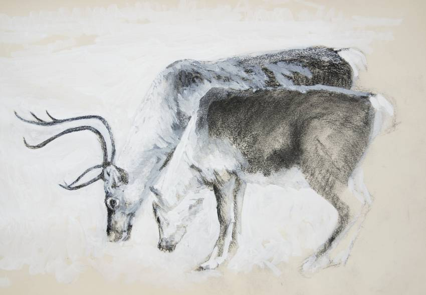Drawing of Reindeer in Goache and Black chalk
